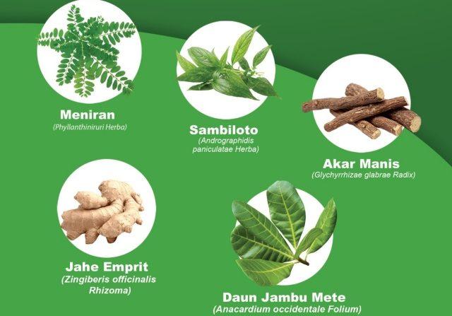 Tanaman Herbal Dipercaya Bantu Pemulihan Covid-19, Apa Kata Dokter?
